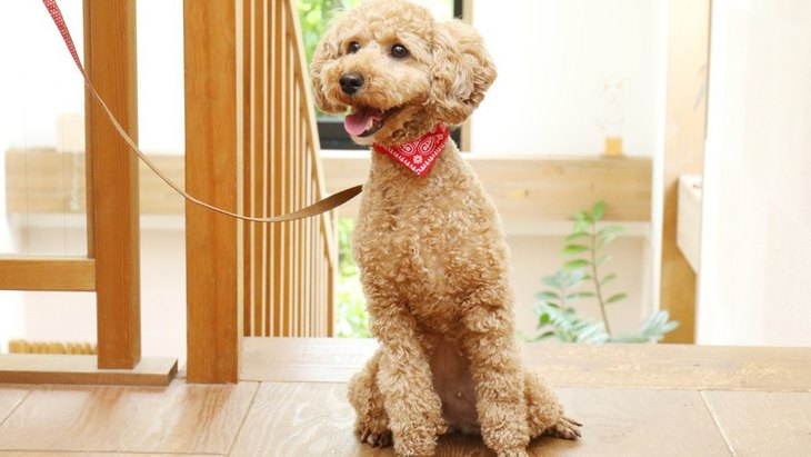 おっとりした性格の犬種4選