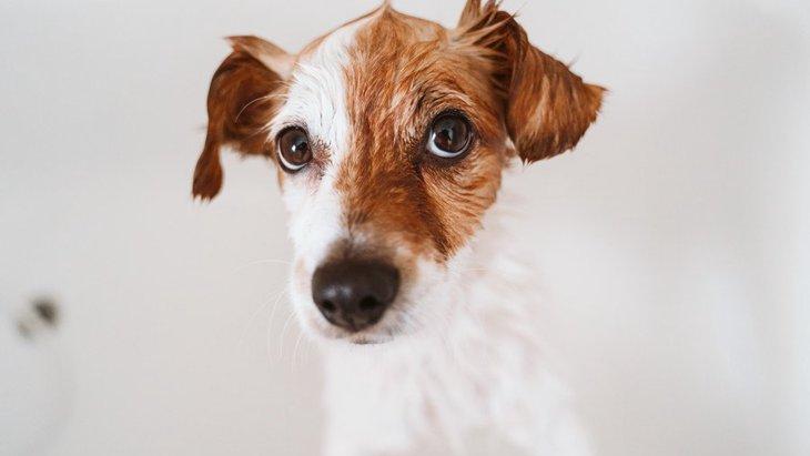 愛犬がシャンプーで暴れて嫌がるのには理由がある!4つの心理とやりたい対策