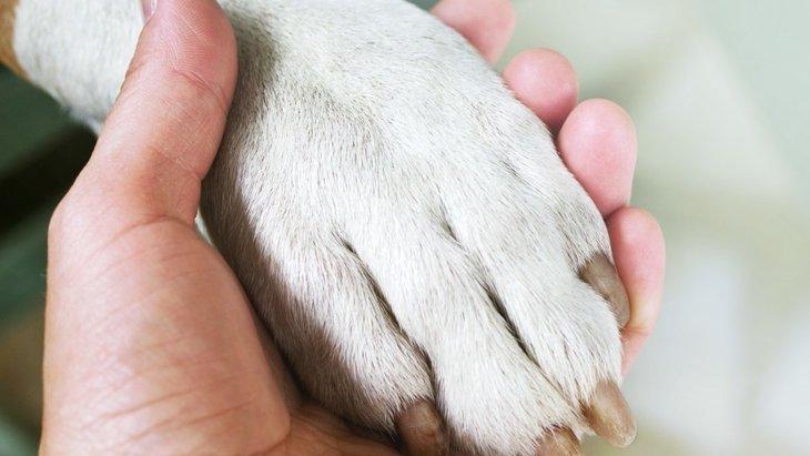 犬の爪が折れてしまった時の応急処置