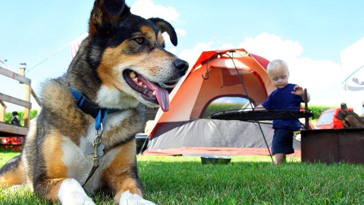 犬とキャンプしよう!関東・関西のおすすめスポットから、持ち物やマナーまで