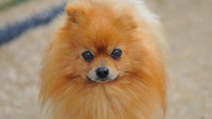 原因不明の犬の皮膚病、アロペシアXについて