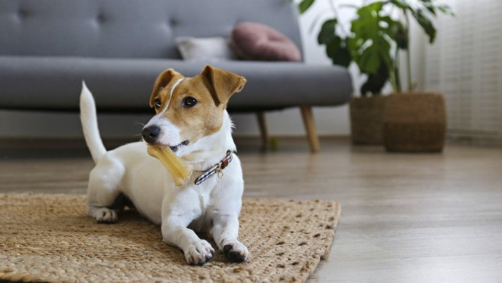 犬にとって危険な『インテリア』5選!部屋の中にある場合は要注意!