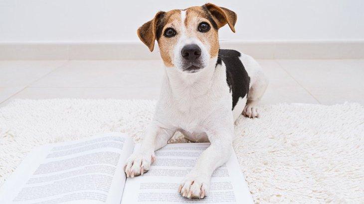 犬のウンチが異常に臭い時に考えられる『5つの病気』