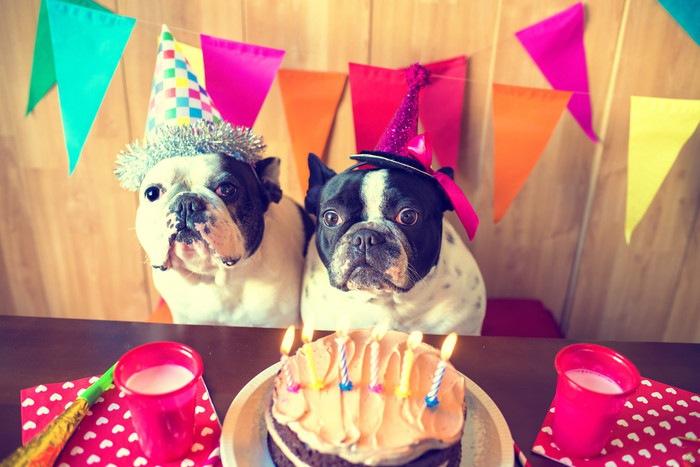 愛犬の誕生日!わんちゃんへのプレゼント調査
