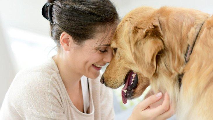 犬が『悲しんでいる時』に見せる行動3選 どうやって接するのがベスト?