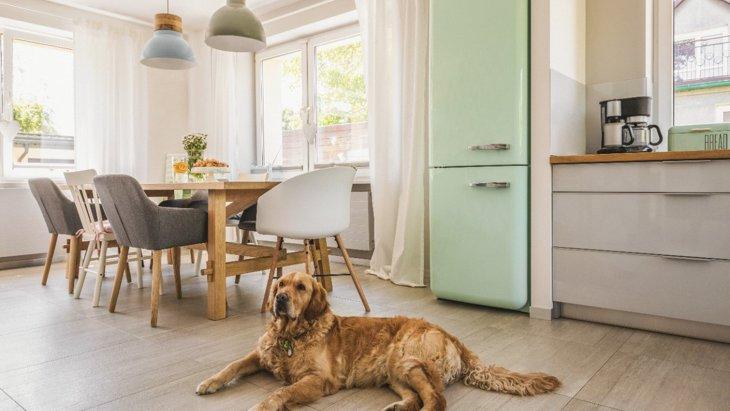 【英国での調査】家の中で犬の留守番に一番適した部屋はどこ?