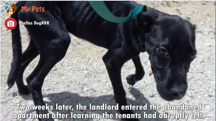 家族の突然の引越でアパート室内に置き去りにされた子犬