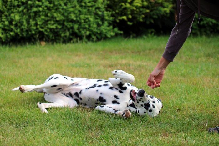 犬の芸の教え方まとめ!バーンやバイバイなど