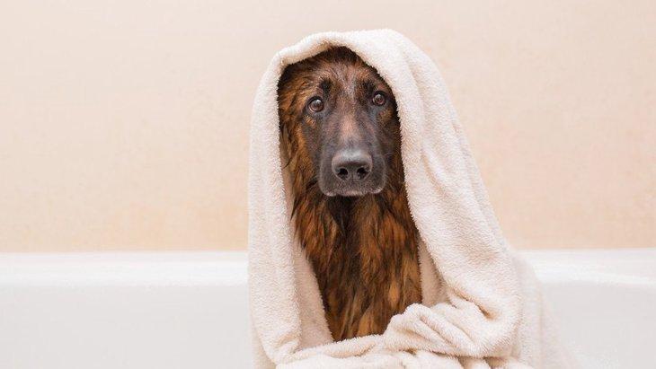 早く乾かして欲しい!犬の願いを叶える超吸水ペット用タオル3選