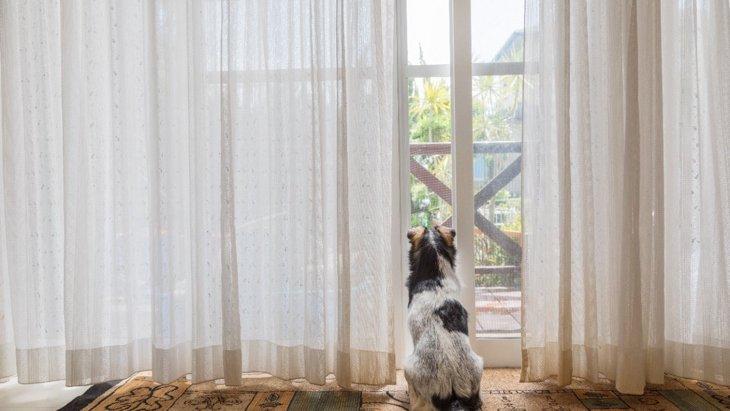 何を考えているの?犬が家の中から外を覗いている時の心理5選