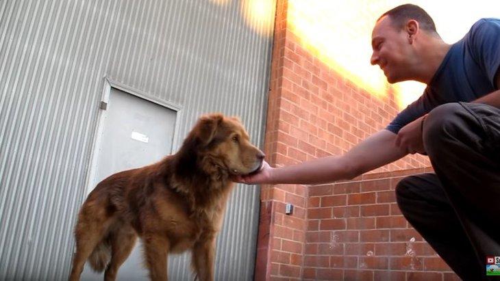 ライオン?クマ?もふもふな大型犬を保護。歯を見る理由も解説!