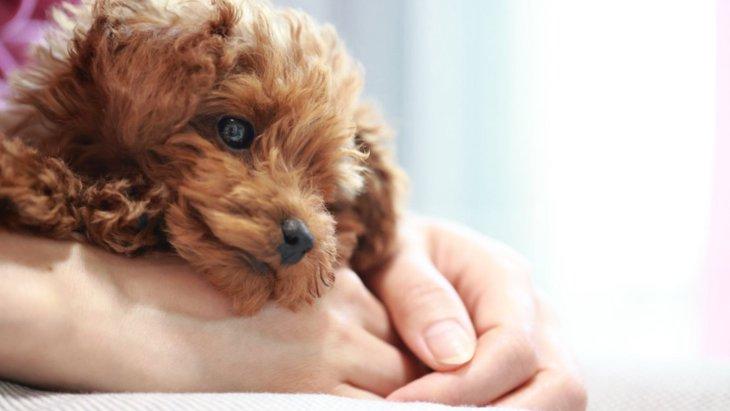 犬が『くーん』と鳴いている時の心理5選!悲しい気持ち?それとも要求してるの?
