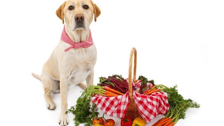 犬に食べさせたい夏野菜5選