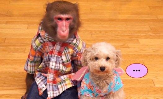 必見!?花火デートで最悪な事態?のわんことお猿