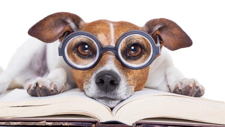 犬の雑誌まとめ!ワンコとの生活に役立つ本9選