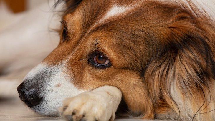 犬がしている『悲しいアピール』4選!どうやって接するべき?