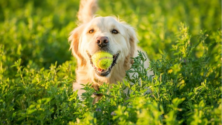 【得意な犬は優秀な犬?】ボール遊びを特別なトレーニングの時間に♪