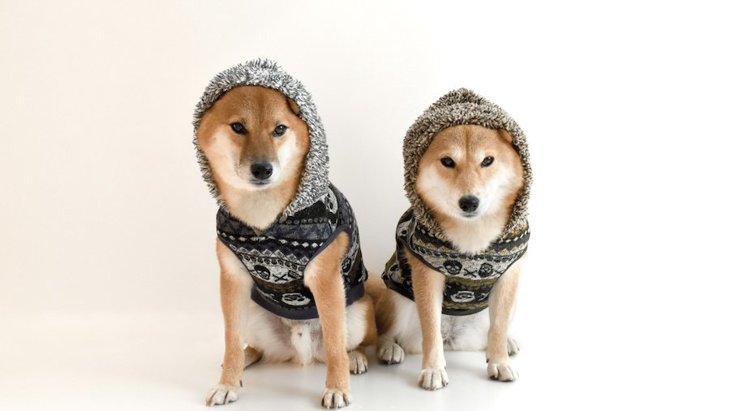 静電気が犬に及ぼす影響とは?対策や使いたいグッズ