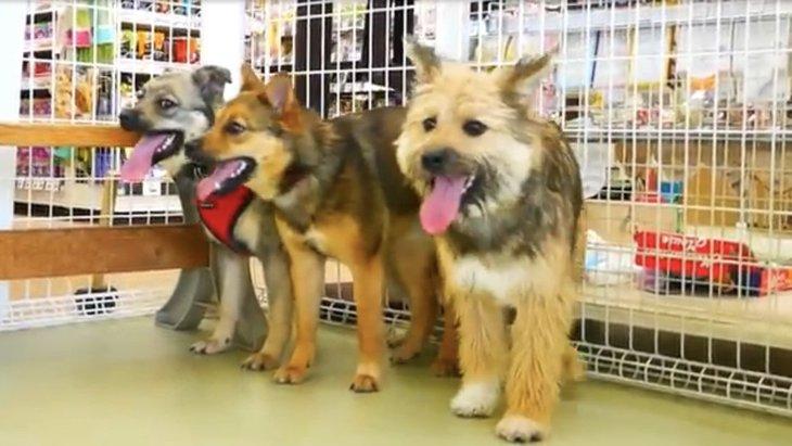 保護犬の兄弟達が大きくなって再会!仲良く出来るかドキドキしていると…?