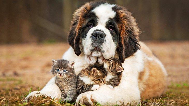 保護犬に家族を!台東区の粋なはからい