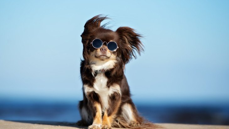 犬にしてはいけない『夏のNG行為』3選