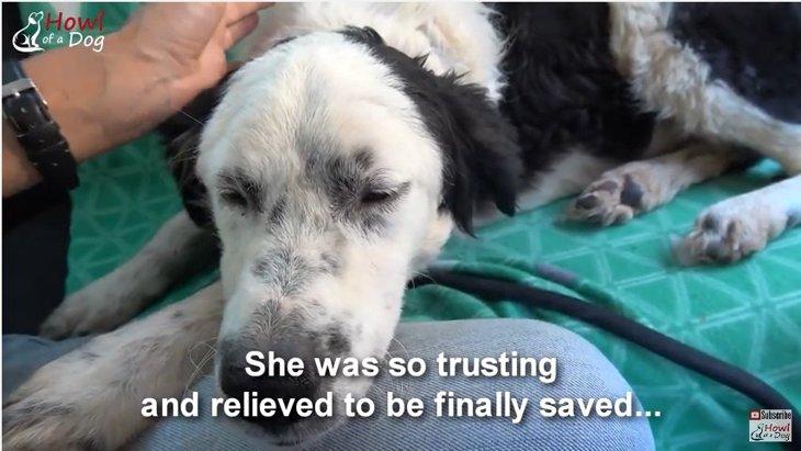 助けてもらったことを犬はちゃんと理解しています