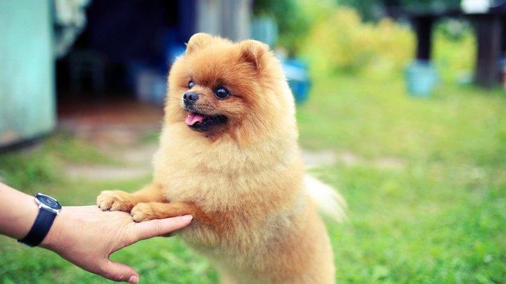 思いやりのある犬の特徴6つ