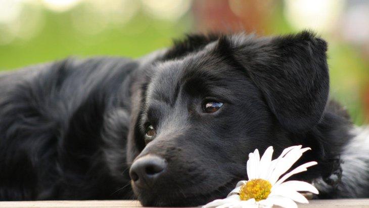 愛犬が亡くなった時に必要な手続き