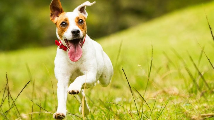 犬が逃げる飼い主を追いかける時の心理4選