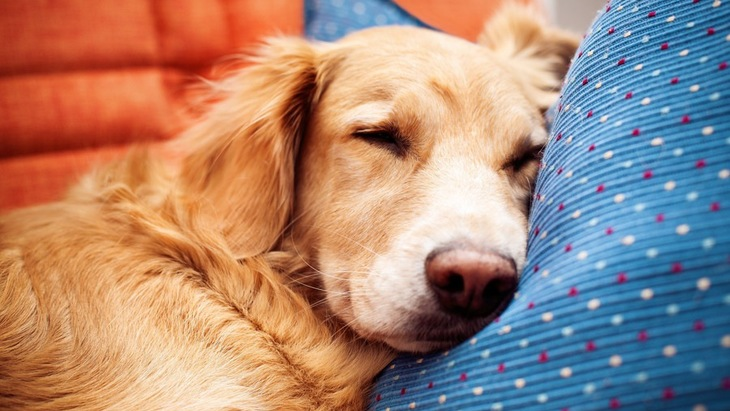 犬が飼い主のいた場所に行きたがる5つの心理とは?