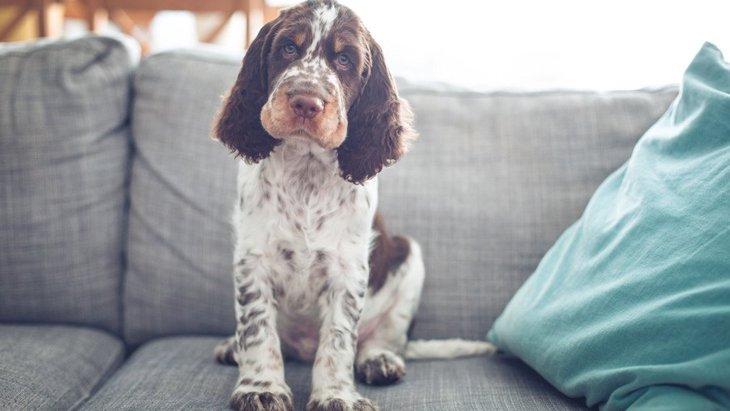 犬アレルギーでも犬は飼えるの?どんな症状?改善する方法は?