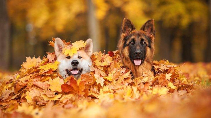 犬が秋を楽しんでいる画像13選
