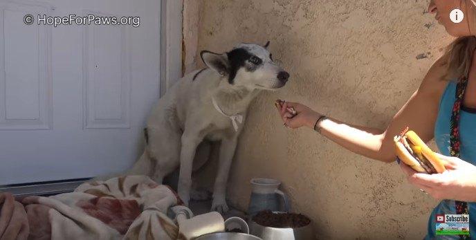 理想的な家庭犬!穏やかでかわいい大型犬を保護
