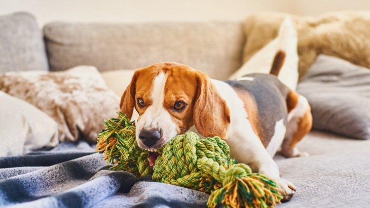 病気や認知研究のベースラインとなる家庭犬の活動パターンの調査結果