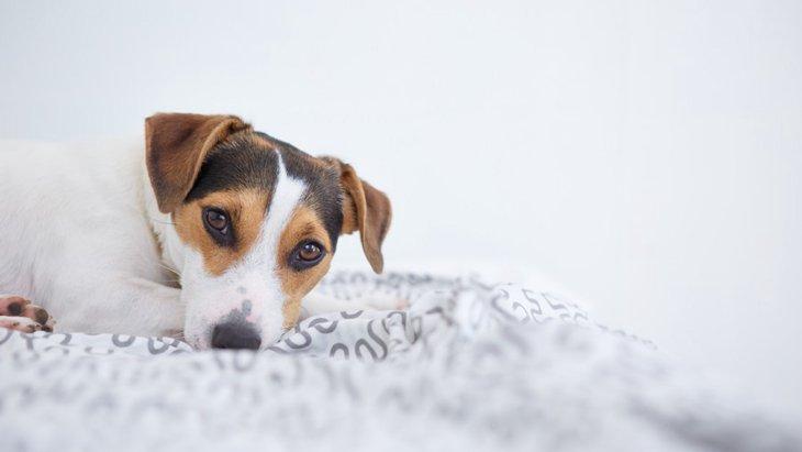 愛犬との生活に空気清浄機を使う3つのメリットと効果的な配置方法