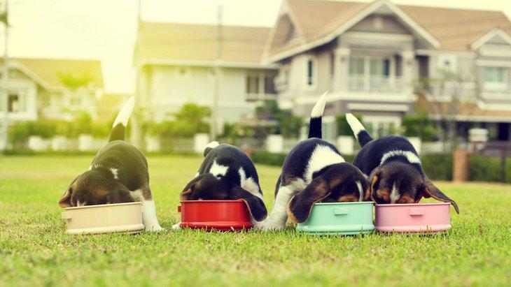 犬の『早食い』を防止する対策4選
