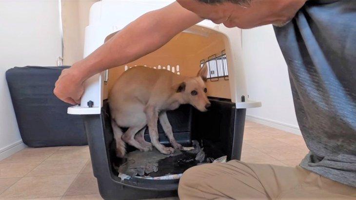 【ぶっつけ本番】誰も触れたことがない野犬に首輪をつけてシャンプー!