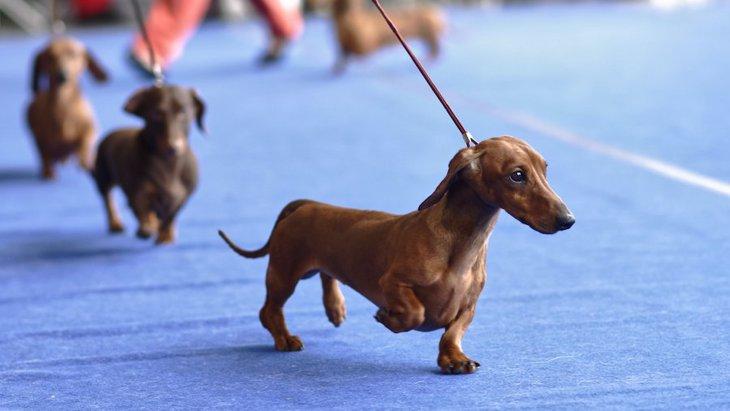純血種の犬は隠れた毛色の遺伝子を持っていることがある【研究結果】