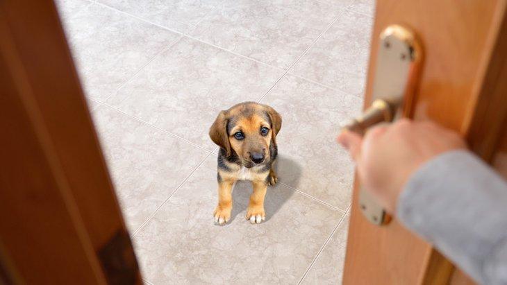 愛犬がトイレやお風呂の前で待っている5つの理由