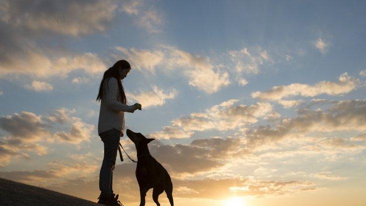 誰よりも頼りになる!犬が飼い主を守るときに取る行動3つ