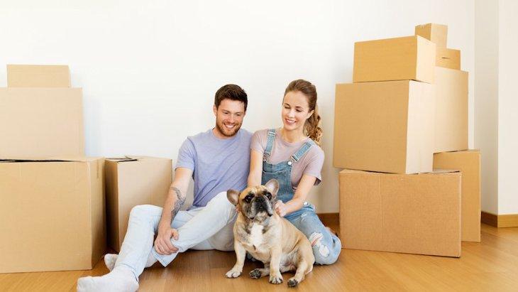 愛犬にとって引っ越しで注意すべき点とは?