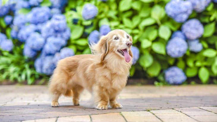 あなたは『犬にとっての理想的な飼い主』になれていますか?
