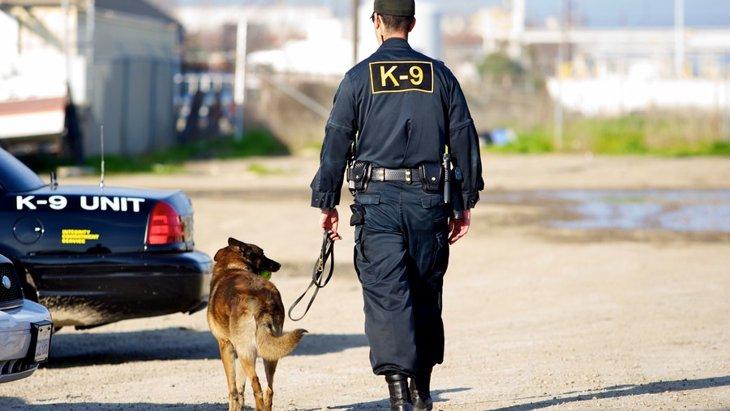 警察犬の仕事やトレーニング内容、引退後の生活などについて