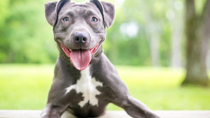 犬が飼い主に突進してくる時の心理4選