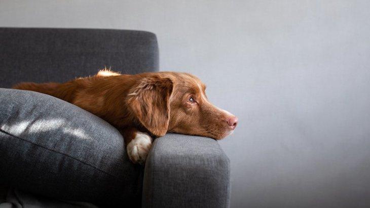 犬のメンタルが弱まっている時のサイン3選 正しい接し方やNG行為を解説