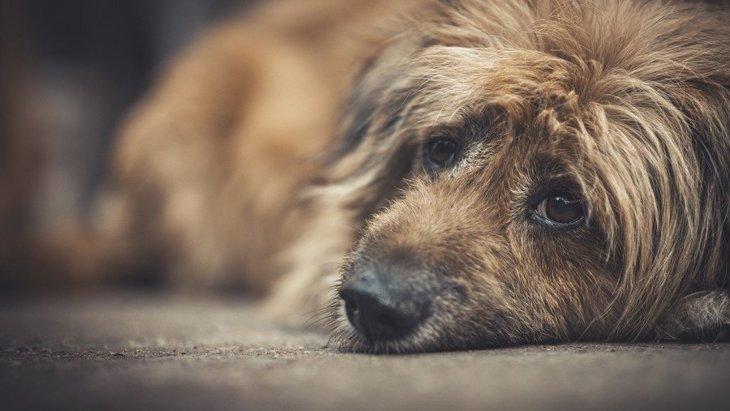 何かあったの?犬が悲しい顔をする理由4つ