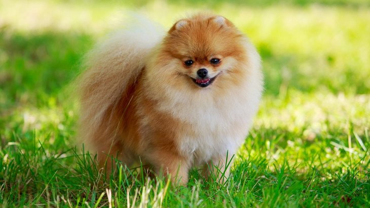 犬が『日向ぼっこ』をする3つのメリットと注意すべきこと