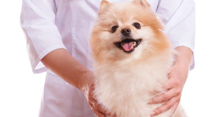 愛犬に効果的なツボ4選!体調別に使い分けてみよう!