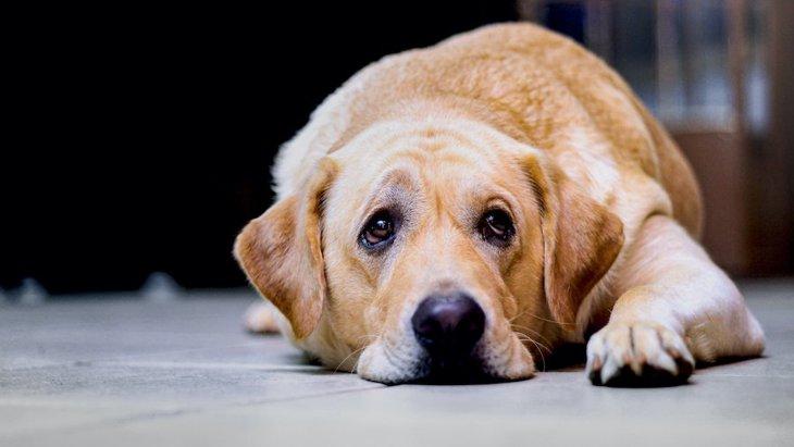 犬の気分が落ち込んでいる時によくする仕草や行動8選
