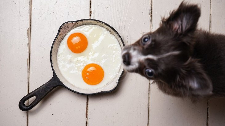 犬に食べさせる時に必ず加熱しなければいけないもの2選